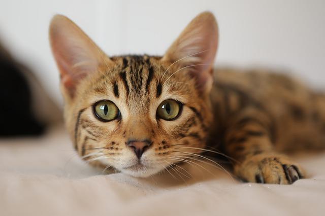 Kändisars kattnamn