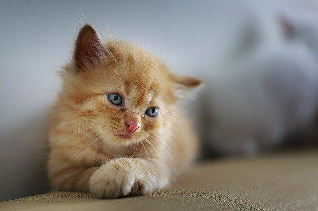 Ovanliga kattnamn